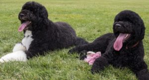Bo and Sunny relaxing on the White House lawn