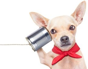 Communicate with animals