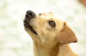 Bad service shouldn't deprive your dog of raw food
