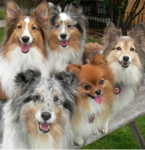 A clan of Smiley Dogs waiting for delivery