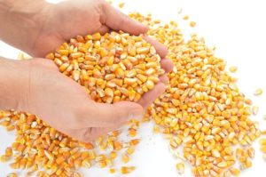 Corn and other ingredients may not always be listed in whole form