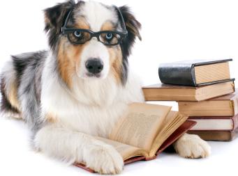 Dog reading many books